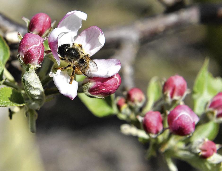 """""""En mai, tonte à l'arrêt"""": les 4 vertus planétaires d'un jardin plus écologique"""