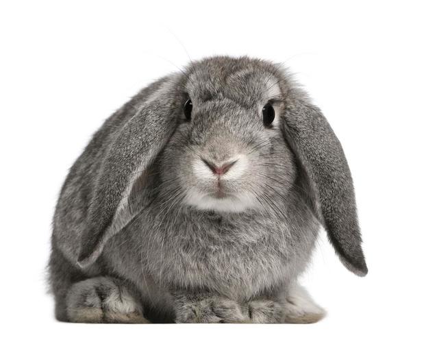 Een konijn met oor- en tandpijn