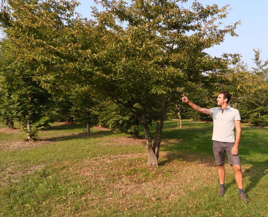 Droogte velt geen gezonde bomen