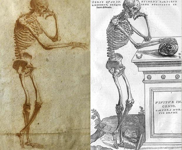 De wonderlijke vondst van een schets voor Vesalius' Fabrica