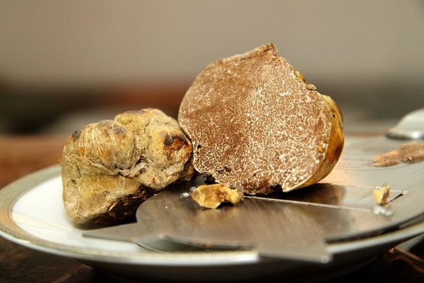 La truffe blanche de Libye, un trésor comestible pour la population locale