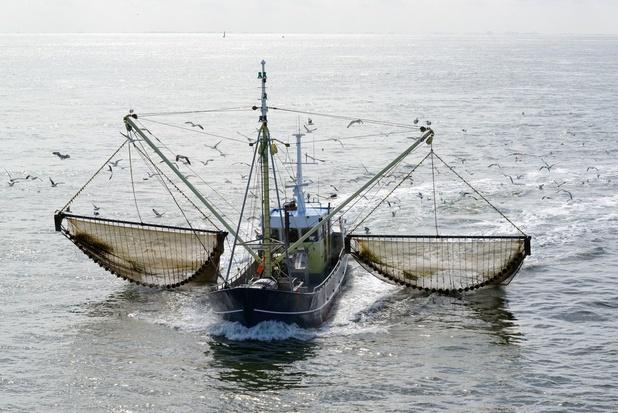 Vooral Belgische vissers plukken vruchten van verbod op pulsvisserij