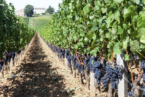 Franse wijnproductie in 2021 wordt waarschijnlijk 'historisch laag'