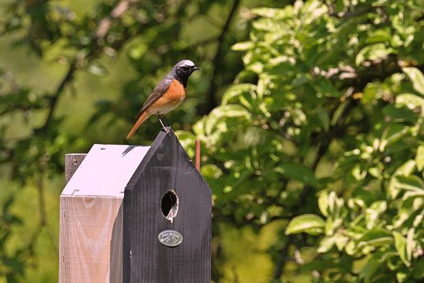 Un refuge pour les oiseaux dans le jardin