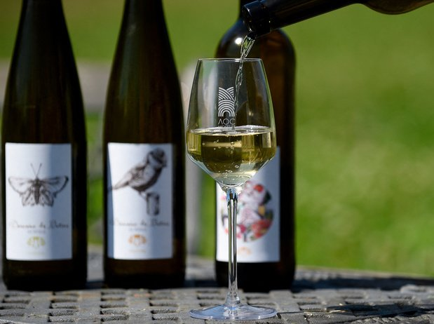 Les vins de Moselle à maturité, dix ans après avoir été ressuscités par leur AOC
