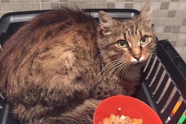 """Kat herenigd met baasje na tocht van 25 km onder motorkap: """"Dankzij Facebookoproep"""""""