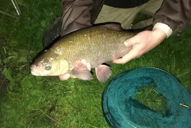 Overlast bij illegaal vissen in Diksmuide