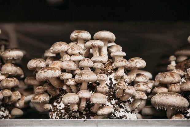 Excursion dégustation : Des champignons asiatiques à base de bière