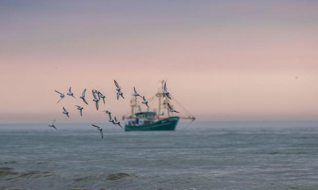 Onzekerheid over brexit: 'Maak als visser nu maar eens een businessplan'