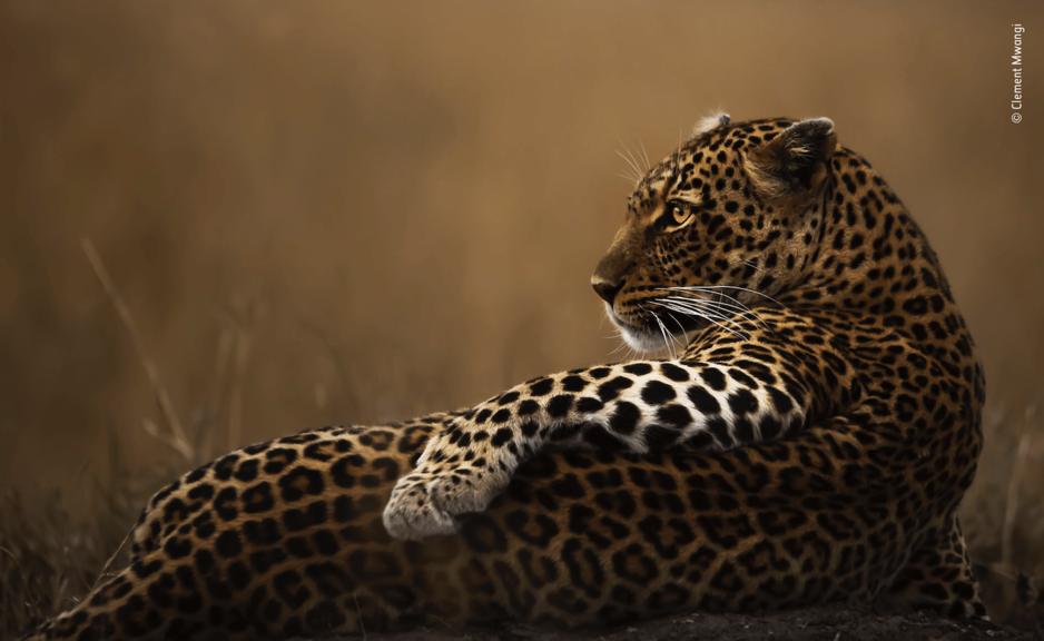 """""""Wildlife Photographer of the Year"""": Votez pour le prix du public"""