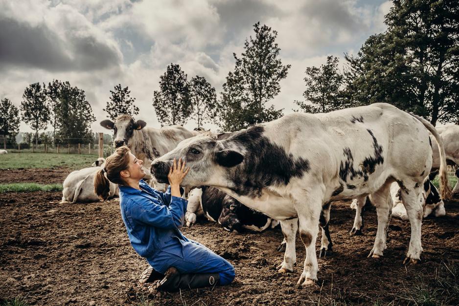 De la ferme à l'assiette: le secteur de la viande devant l'objectif