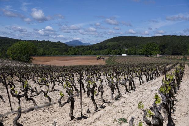Rosé de Provence: des vignobles très convoités par les grands patrons