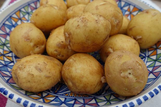 La pomme de terre de Noirmoutier reçoit le label IGP
