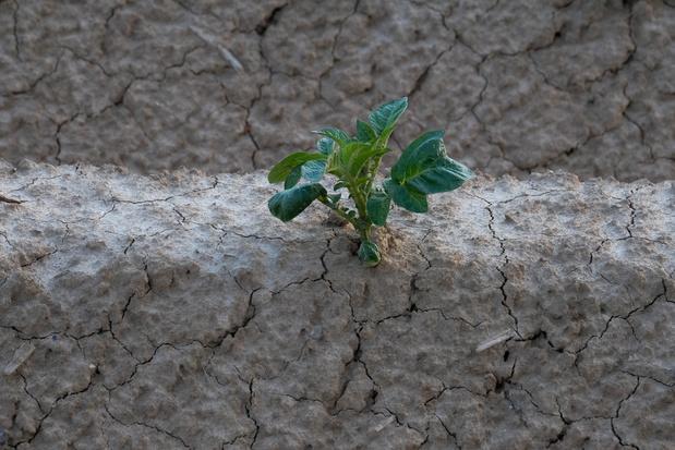 Sécheresse : le mois de juin sera décisif pour les récoltes