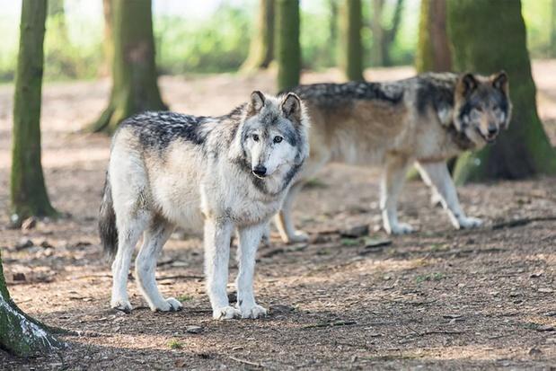 On a testé: un parc animalier et d'aventure à Spa