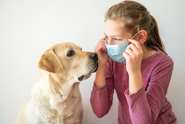 Les animaux de compagnie huit fois plus infectés au contact de malades du coronavirus