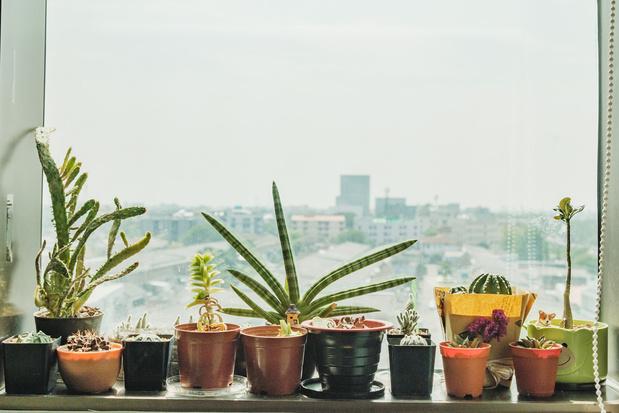 Va-t-on bientôt pouvoir communiquer avec nos plantes ?