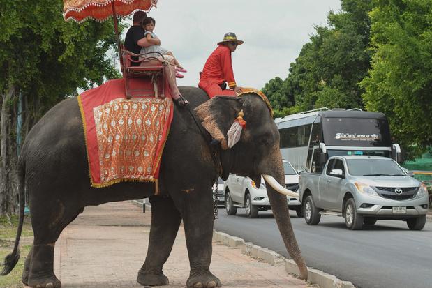 """Le cruel dressage des """"éléphants à touristes"""" en Thaïlande dénoncé par une vidéo"""