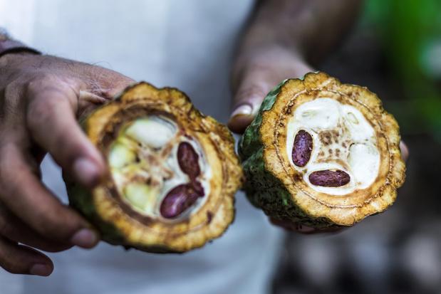 Grâce au cacao bio, des petits paysans brésiliens sortent peu à peu de la misère