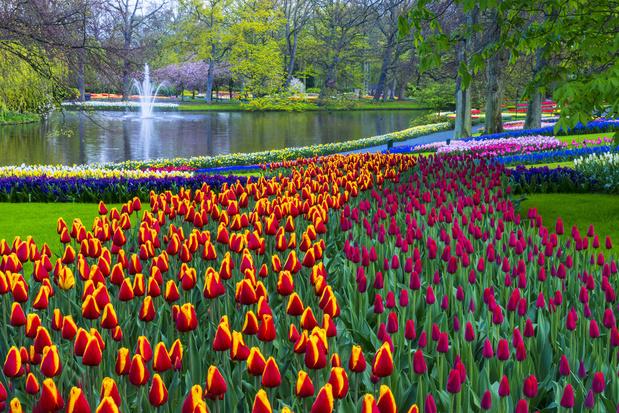 Vidéo: Promenade virtuelle au milieu des milliers de tulipes de Keukenhof