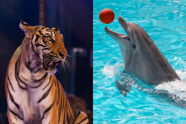Plus de fauves dans les cirques ni de dauphins dans les parcs en France