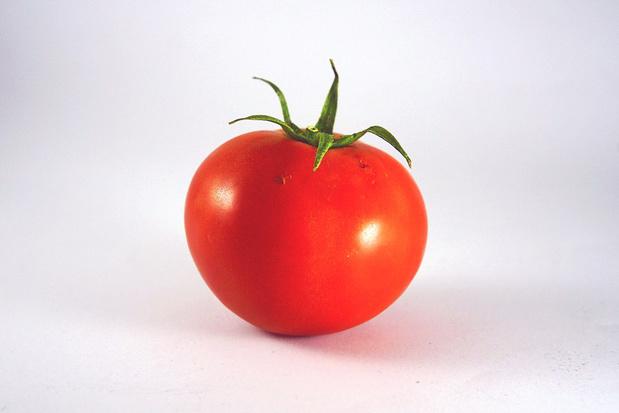 Le virus de la tomate gagne du terrain en Europe