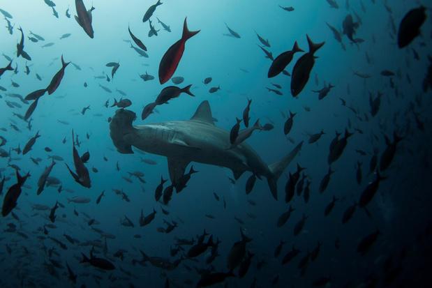 Les Galapagos rouvrent leur réserve marine et certains sites