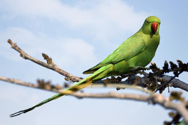 Répérez les oiseaux des villes