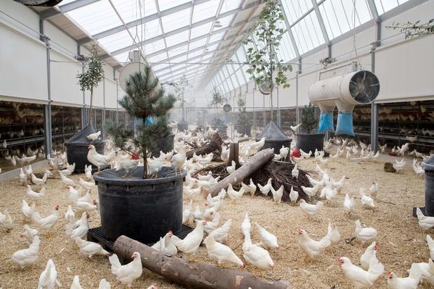 Belgische vestiging van diervriendelijke legboerderij Kipster stapje dichterbij