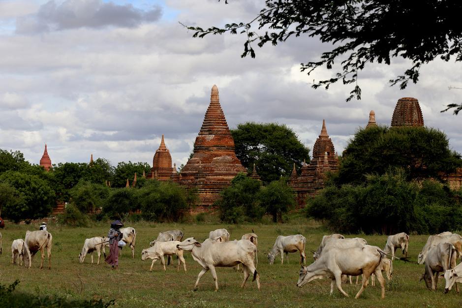 Vidé de ses touristes, le site de Bagan en Birmanie devient la proie des pilleurs de temples