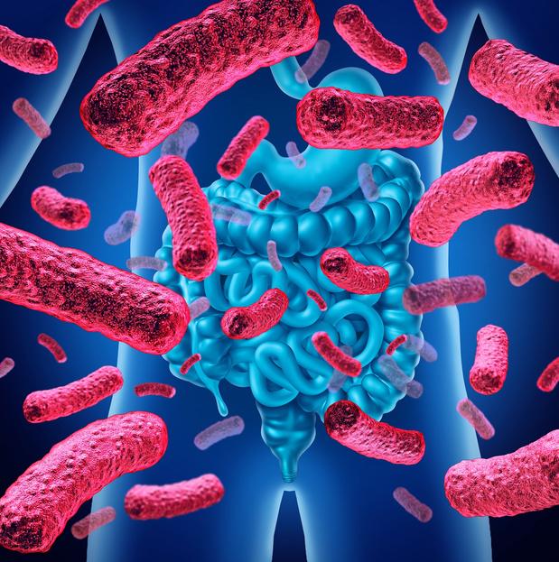 Découverte d'une bactérie prometteuse dans la lutte contre le diabète et l'obésité