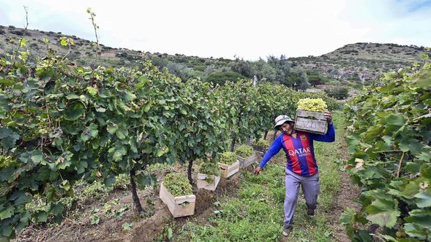 Les vins d'altitude de Bolivie, une tradition séculaire, un goût confidentiel