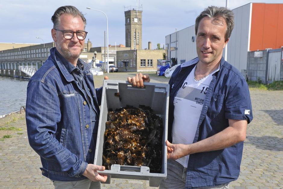 Is zeewier het superfood van de toekomst?
