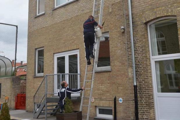 Brandweer verwijdert wespennest in vbs De Ladder