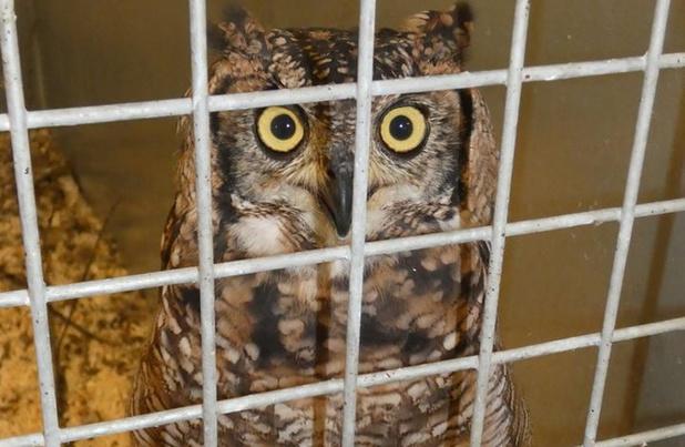 Dierenopvangcentrum De Zonnegloed geeft weer enkele speciale uilen onderdak