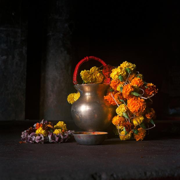 L'oeuvre de la semaine: Les fleurs de Calcutta