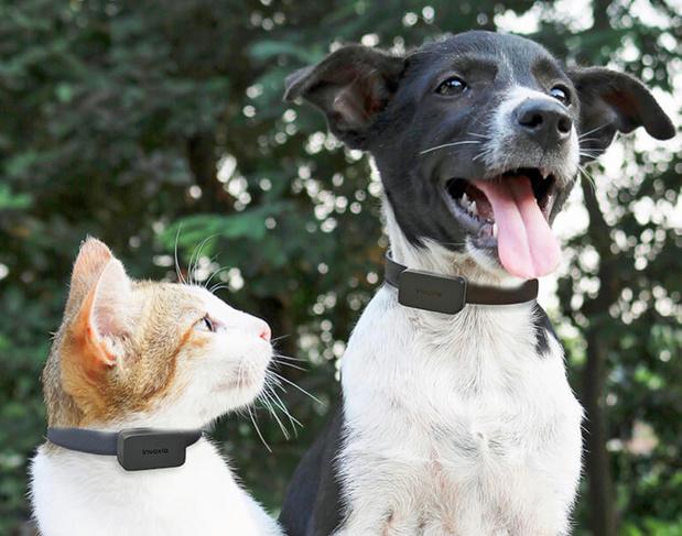 Gps-data laat zien dat huisdieren een luizenleven leiden tijdens de crisis