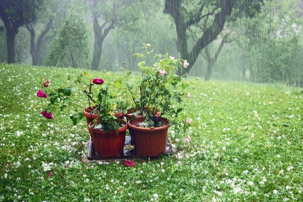 Protéger son jardin de la pluie