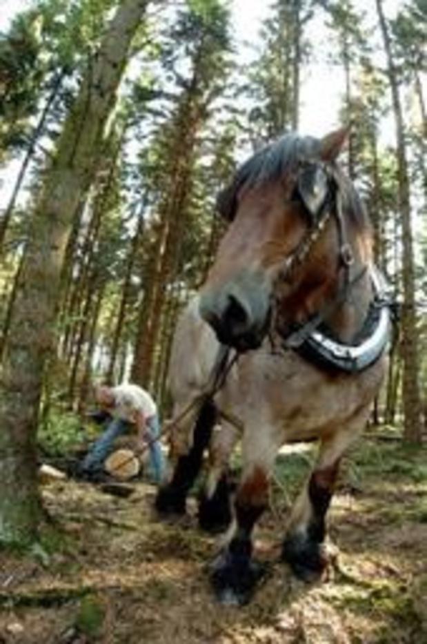 Près d'un francophone sur deux pense qu'il faut interdire l'abattage d'arbres en forêt