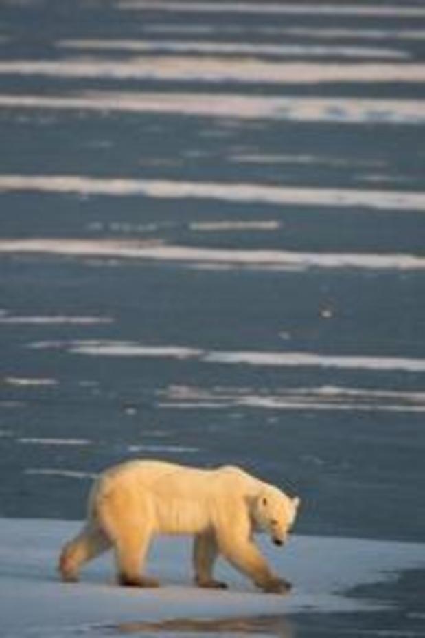 Klimaatsceptici beter vertegenwoordigd in Engelstalige media dan wetenschappers
