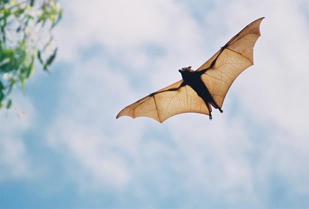 Zoonose : quels sont les virus susceptibles de provoquer la prochaine pandémie?