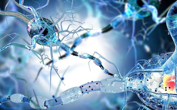 De darmen zouden meespelen bij de pathogenese van multipele sclerose