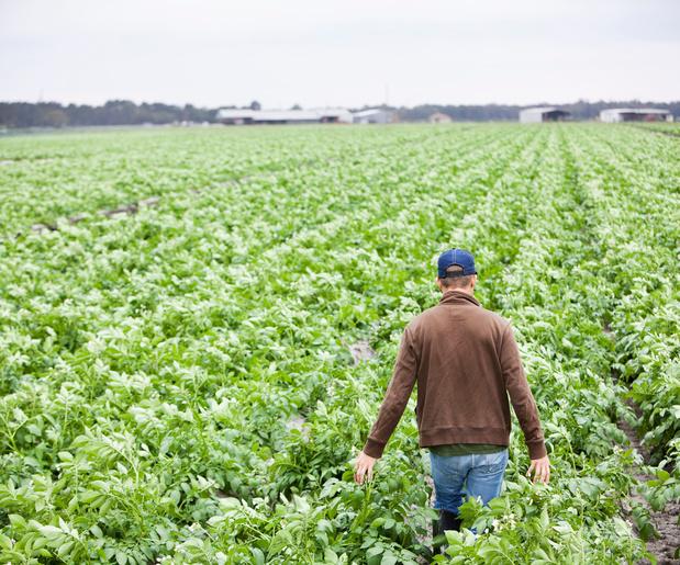 'Te veel aardappelen en geen bloem: ook ons kwetsbaar voedingssysteem heeft een exitstrategie nodig'