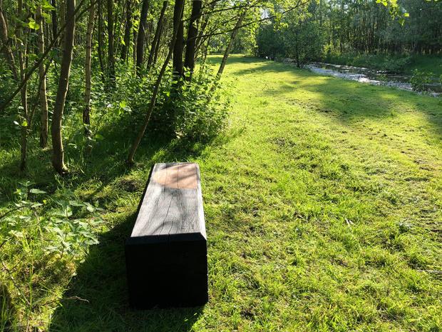 Een bosbad tegen de burn-out: Vlaanderen krijgt zes nieuwe natuuroases
