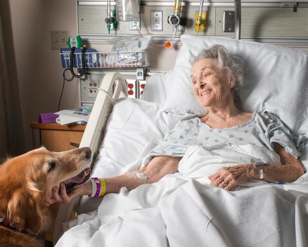 """Un chien """"thérapeutique"""" apaise les patients aux urgences"""