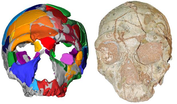 """Le plus vieil Homo sapiens """"non africain"""" a été retrouvé: il avance de plus de 150.000 ans l'arrivée de notre espèce en Europe"""