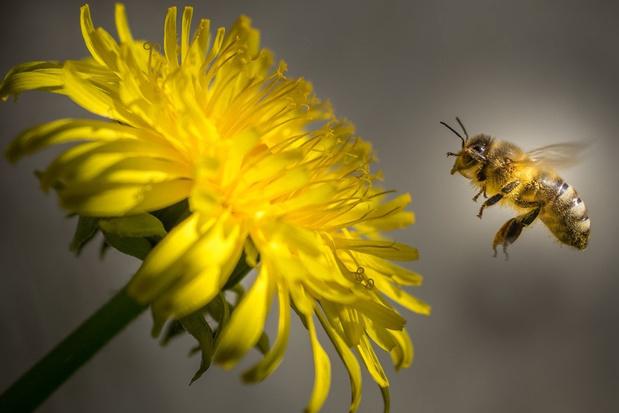 De resultaten van een maand zonder grasmaaier: 5 miljoen bijen geholpen