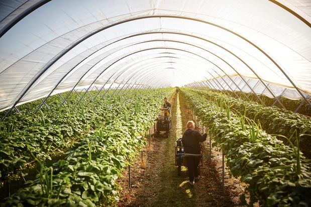 'Ons voedselsysteem is defect en duwt de planeet over haar limieten'