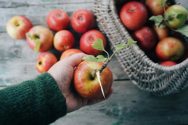 Food Waste Awards: pluk-initiatief 'Buurtfruit', middelbare scholieren en witloofkroketten bekroond