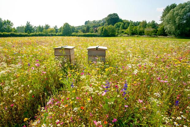 Belgische organisaties slaan de handen in elkaar voor biodiversiteit